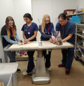 Veterinary Sciences